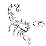 Scorpion and Monkey