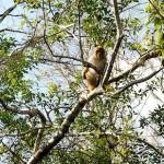 Ponder the primates