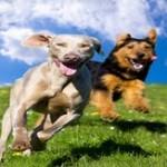 Juancho vs. Dogboy (advantage-Dogboy)